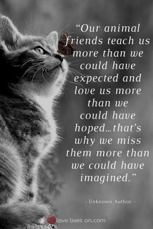 animal-friends-teach-us